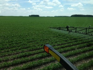 Spraying Roundup on beans 2
