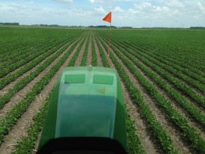 Spraying Roundup on beans