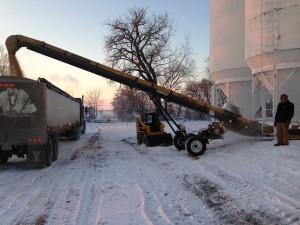 Filling a truck with soybeans