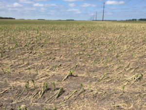 june-2016-hail-morgan-stand-day-6-across-rows