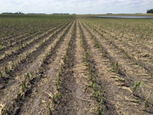 june-2016-hail-morgan-stand-day-6-rows