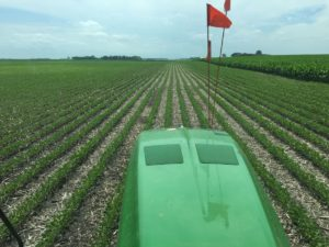 Final Pass Spraying Beans