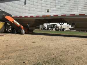 beans-unload-cattle